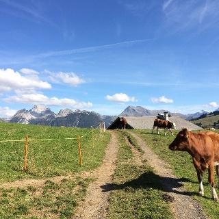 Tour Sparenmoos - Schauenegg