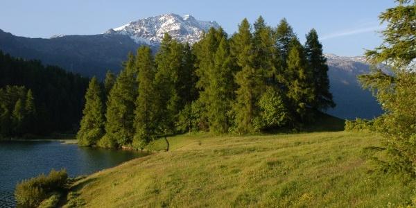 Champfèrer See mit Piz Corvatsch