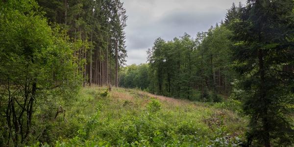 Leiberger Wald