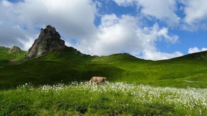 "0400 Kuh weidet unterhalb vom Sächsmoor | 47°04'31.5""N 9°14'17.2""E"