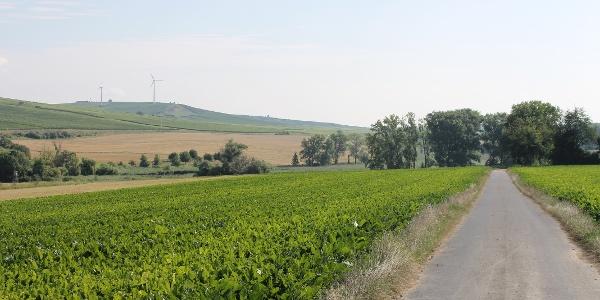 Fahrt Richtung Hahnheimer Bruch mit Blick auf den Selzer Berg
