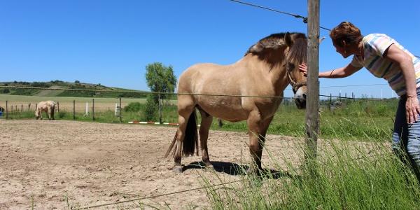 Pferdekoppeln am Wegesrand bei Wonsheim
