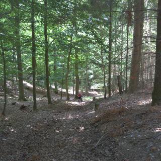 Waldweg Meckenbacher Wald