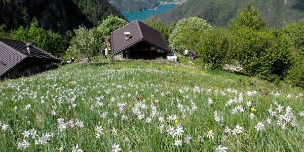 Hay loft in Dromaè