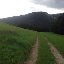 Wanderung durch saftig, grüne Wiesen