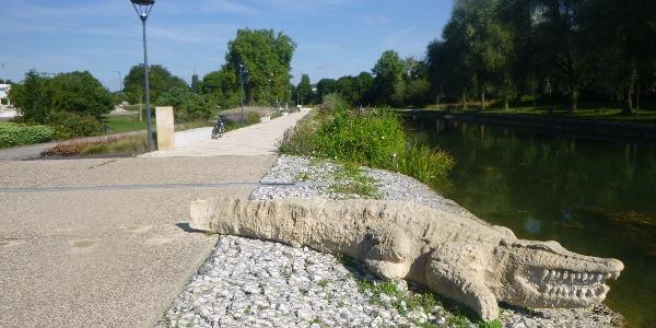 Crocodile Dijon