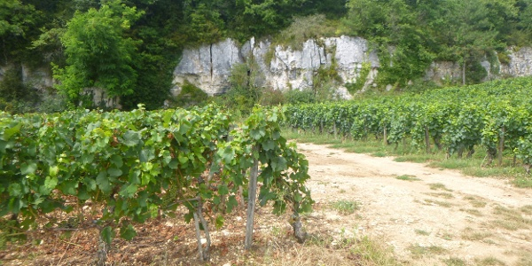 Small secluded vineyard