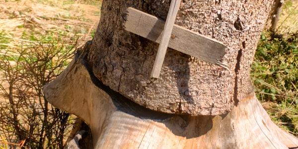 Selbst aus einem Baumstumpf kann man noch was zaubern