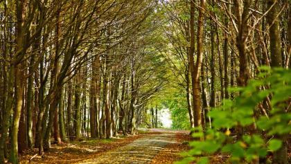 Naturerlebnis Wald
