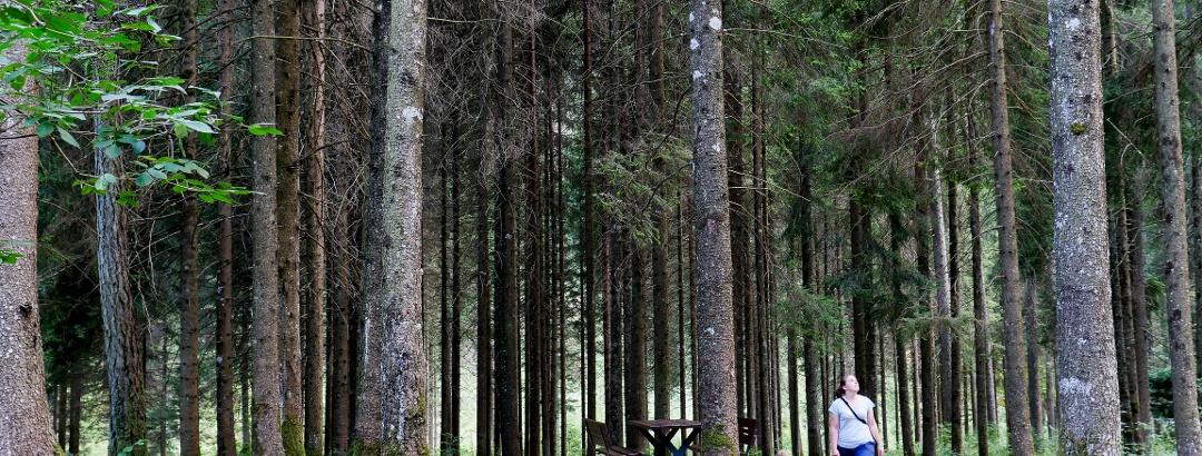 Sentiero Naturalistico di Fondovalle