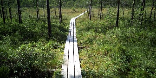 Wandern wie in Lappland