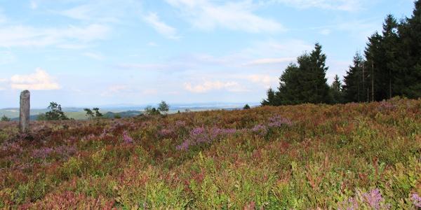 Blühende Heide auf dem Bergweg am Kahlen Pön.