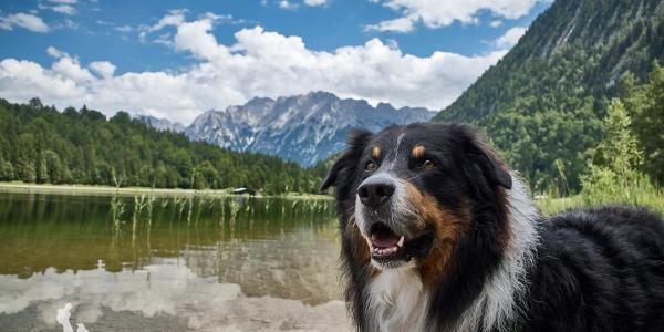 Idyllischer Ferchensee mit Bergspiegelung.