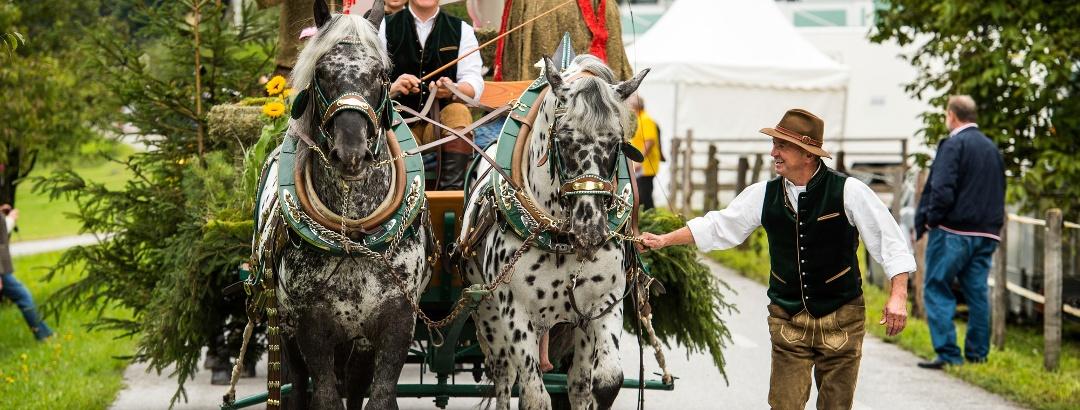 Pferdekutsche beim Bauernherbst