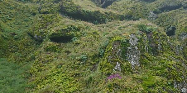 Die Schlucht Rauðfeldsgjá im Naturidyll Island