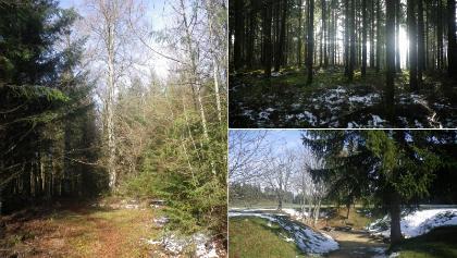 Wandern an der Albkante und im Wald