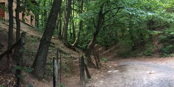 Kék kereszt turistajelzés az erdőben