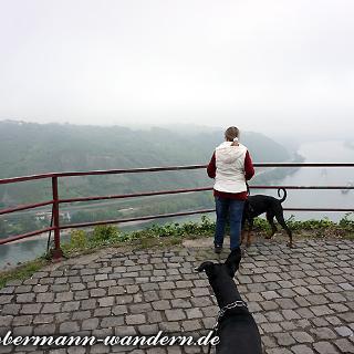 Blick auf den Rhein