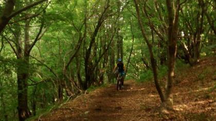 Der Trail führt zum Teil durch bewaldetes Gebiet
