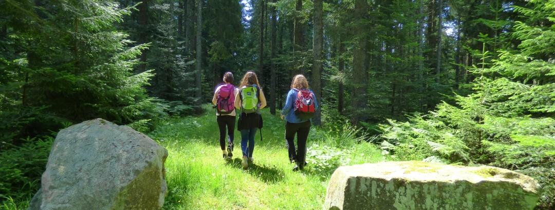 Wandern auf dem Wiesenweg in Freudenstadt im Schwarzwald