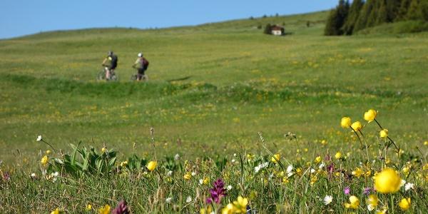 Prächtige Bergflora im Frühling/Sommer