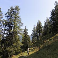 Wanderweg zwischen Mossenalm und Gföllalm