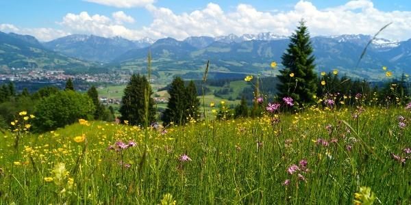 Mountain meadows on the nature trail to Hüttenberg