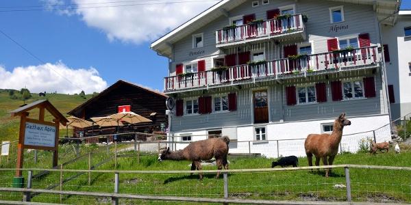 Gasthaus Alpina Sommer
