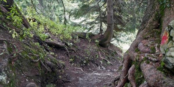 Durch den Bergwald