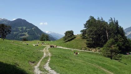 Mittenberg - beliebtes Churer Ausflugsziel