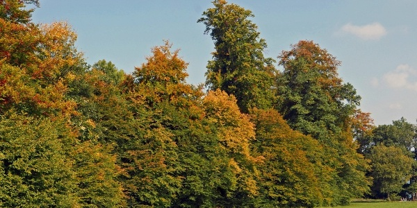 Herbstwald bei Schopfloch