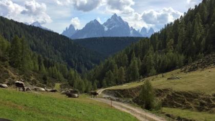 Steinberghütte über Silvestertal