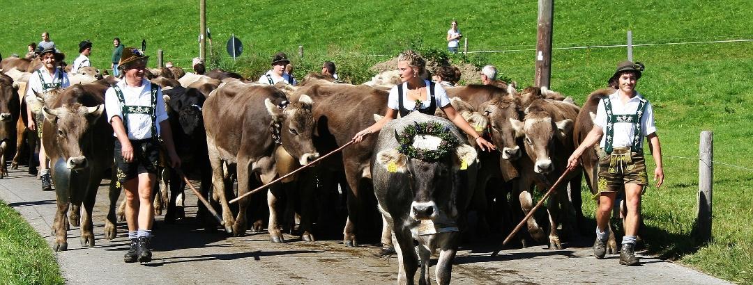 Viehscheid im Oberallgäu