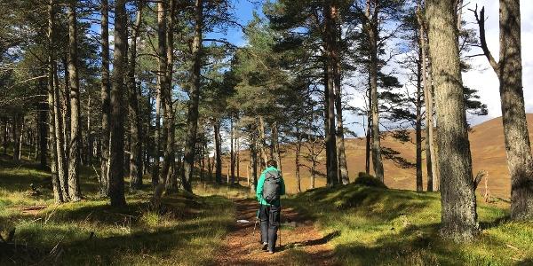 Blair Atholl Estates woodland