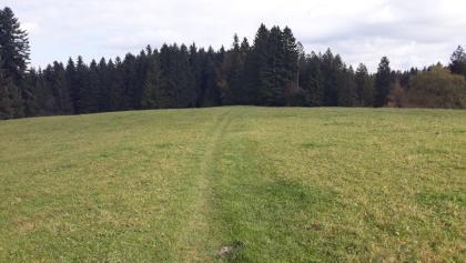 schöner Pfad durch Hochsträss bei Sulzberg