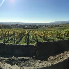 Blick von der Römerkelter in Ungstein auf Bad-Dürckheim