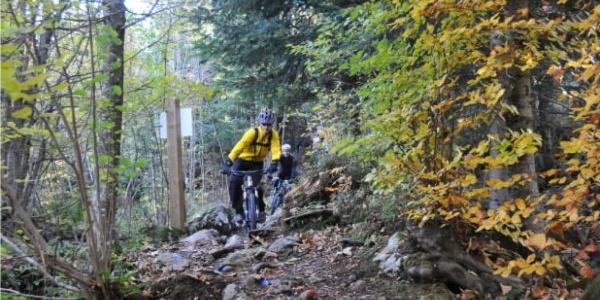 Seeblick Trail
