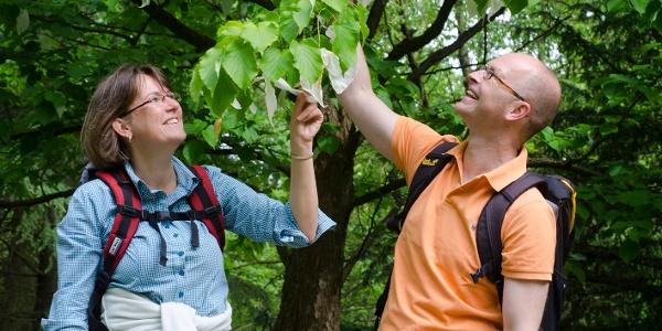 Wanderer am Taschentuchbaum im Arboretum