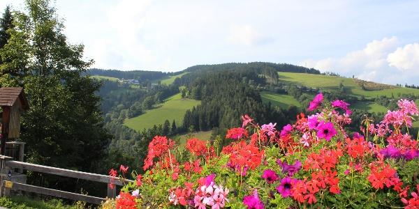 Aussicht Heilbrunn
