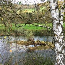 Jagst bei Unterregenbach
