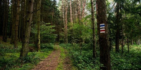 A kék és a piros turistajelzés fonódása Kondorfa környékén