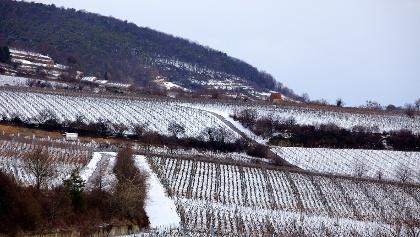 Winterliche Weinberge westlich Deidesheim