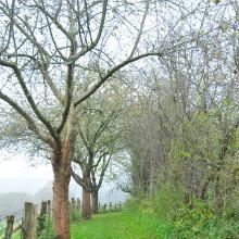 Weg mit Obstbäumen
