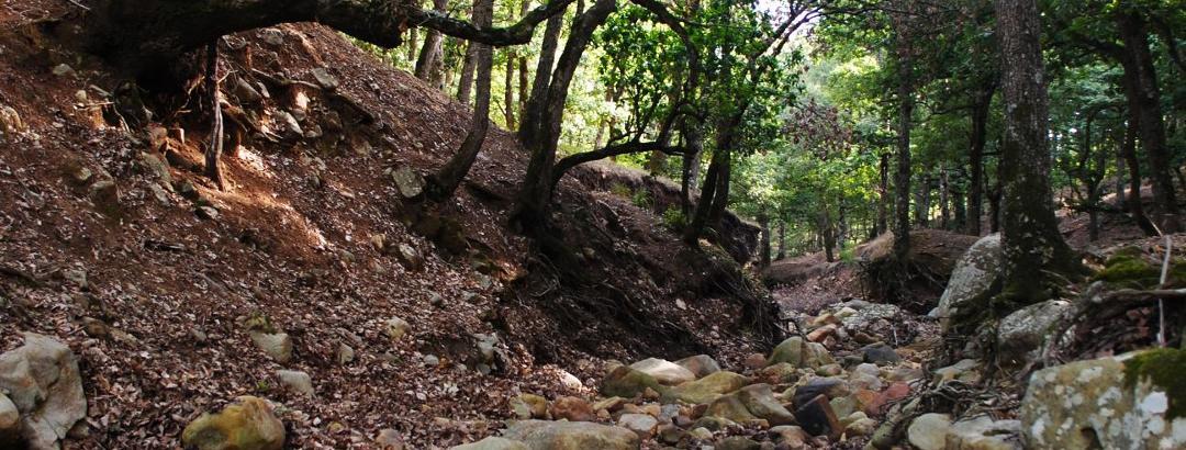 Creek Crossing El Feija National Park