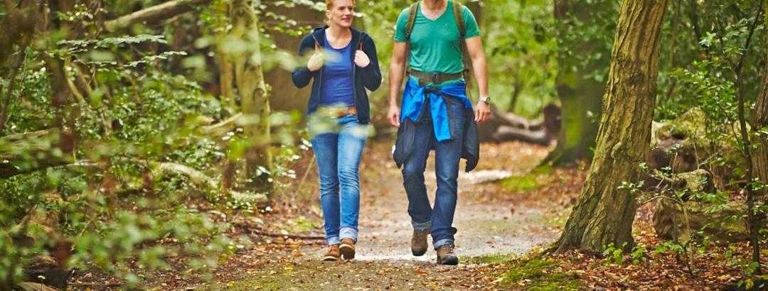 Waldweg im Bentheimer Wald