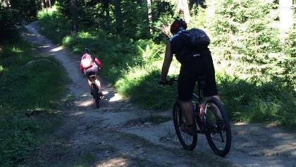 Waldabschnitt der Rigi-Tour