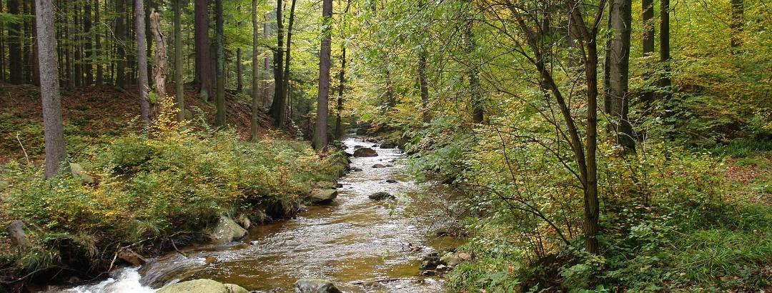 Die Ilse sucht sich ihren Weg durch den herbstlichen Wald