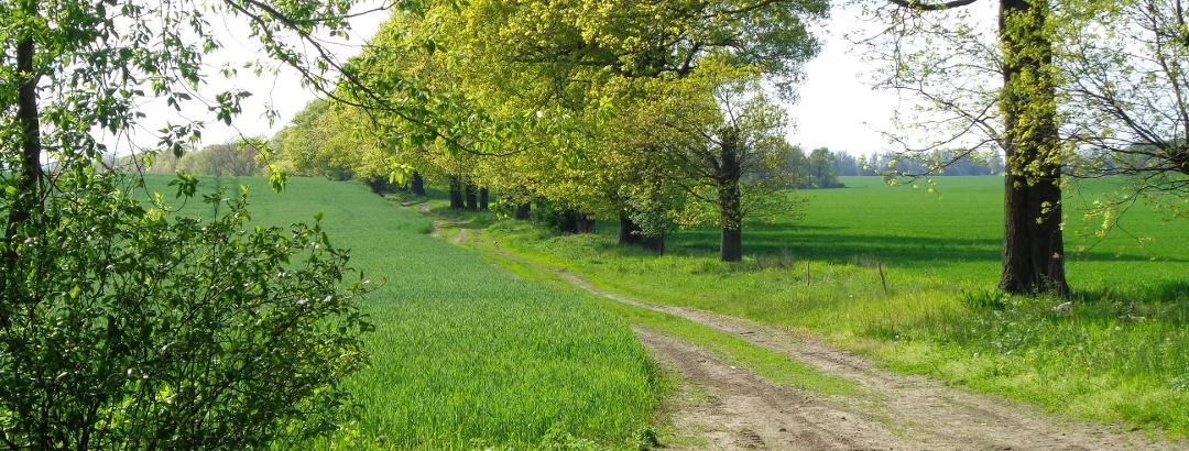 Pilgerweg nahe Rohrlack