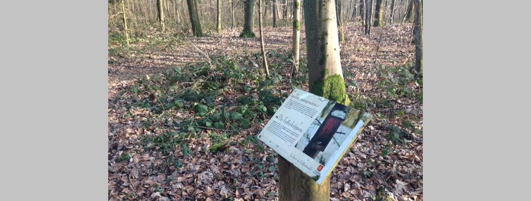 Infotafeln klären über die Natur im Griffertwald auf