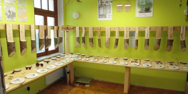 Wald-Erlebnis-Ausstellung Haus des Gastes Schnarrtanne - Heimische Bäume